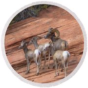 Big Horn Sheep, Zion National Park Round Beach Towel