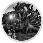 Big Tree On The Beach At Sunrise In Monochrome Round Beach Towel