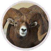 Bighorn Ram In Montana Round Beach Towel