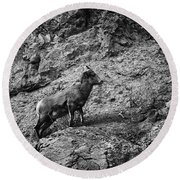 Bighorn Sheep Ewe On Wolf Creek Pass Round Beach Towel