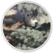 Round Beach Towel featuring the photograph Bighorn Sheep Lamb's Hiding Place by Jennie Marie Schell