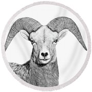 Round Beach Towel featuring the photograph Bighorn Sheep Ram Black And White by Jennie Marie Schell