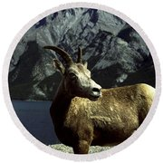 Round Beach Towel featuring the photograph Bighorn Sheep by Sally Weigand