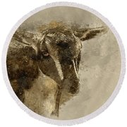 Billy Round Beach Towel by Cyndy Doty