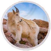 Billy Goat's Scruff Round Beach Towel by Darren White