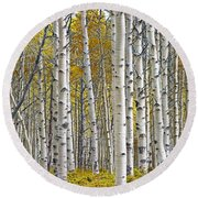Birch Tree Grove With A Touch Of Yellow Color Round Beach Towel