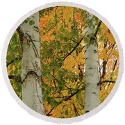 Birch Tree Round Beach Towel
