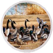 Round Beach Towel featuring the photograph Bird Gang Wars by Sumoflam Photography