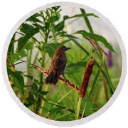 Bird In Cattails Round Beach Towel