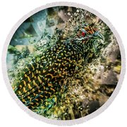 Bird Meets Glass Round Beach Towel