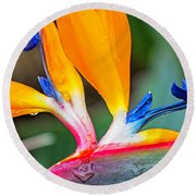 Bird Of Paradise After The Rain Round Beach Towel
