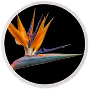 Bird Of Paradise Flower On Black Round Beach Towel