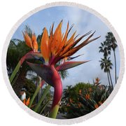 Bird Of Paradise Peace And Joy Round Beach Towel