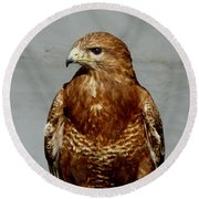 Bird Of Prey  Round Beach Towel