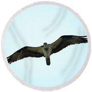 Bird Of Prey Round Beach Towel