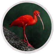 Bird On A Catwalk Round Beach Towel