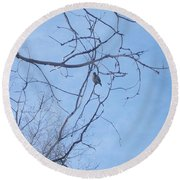 Bird On A Limb Round Beach Towel by Jewel Hengen