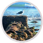 Bird On Perch At Beach Round Beach Towel