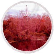 Round Beach Towel featuring the photograph Bird Out On A Limb by Madeline Ellis