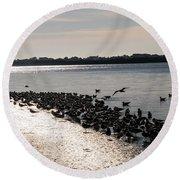 Birds At The Beach Round Beach Towel