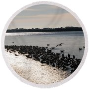 Birds At The Beach Round Beach Towel