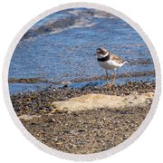 Round Beach Towel featuring the photograph Birds Of Maine by Trace Kittrell