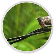 Birds Of Sri Lanka  Pycnonotus Cafer Round Beach Towel