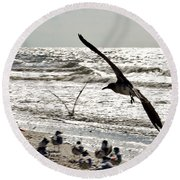 Birds World Round Beach Towel
