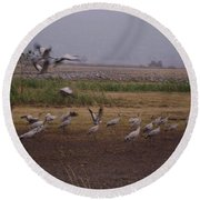 Birds4 Round Beach Towel