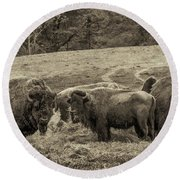 Bison 1 - Pano Round Beach Towel