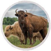 Bison 10 Round Beach Towel