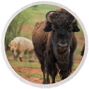 Bison 6 Round Beach Towel