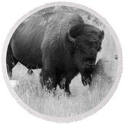 Bison And Buffalo Round Beach Towel