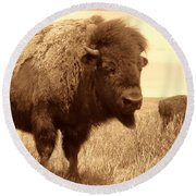Bison And Calf Round Beach Towel