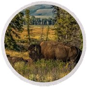 Bison Bull Herding Cows Round Beach Towel by Yeates Photography