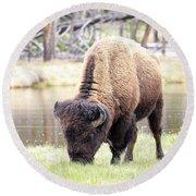 Bison By Water Round Beach Towel by Steve McKinzie
