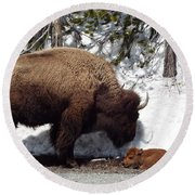 Bison Calf After Birth Round Beach Towel