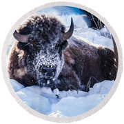 Bison At Frozen Dawn Round Beach Towel by Yeates Photography