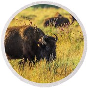 Bison In Autumn Gold Round Beach Towel by Yeates Photography