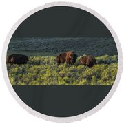 Bison In Autumn Light Round Beach Towel by Yeates Photography