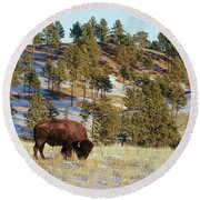 Bison In Custer State Park Round Beach Towel