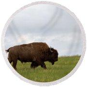 Bison On The American Prairie Round Beach Towel