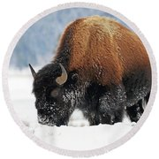 Bison Roaming In The Lamar Valley Round Beach Towel