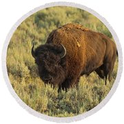 Bison Round Beach Towel by Sebastian Musial