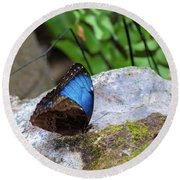 Round Beach Towel featuring the photograph Black And Blue Butterfly Eating by Raphael Lopez