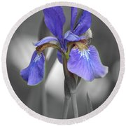 Round Beach Towel featuring the photograph Black And White Blue Bearded Iris by Brenda Jacobs