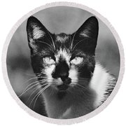 Black And White Cat Close Up Round Beach Towel