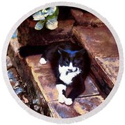 Black And White Cat Resting Regally Round Beach Towel