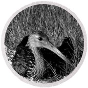 Black And White Resting Limpkin Bird Round Beach Towel