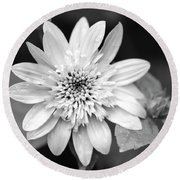 Round Beach Towel featuring the photograph Black And White Sunrise Coreopsis by Christina Rollo